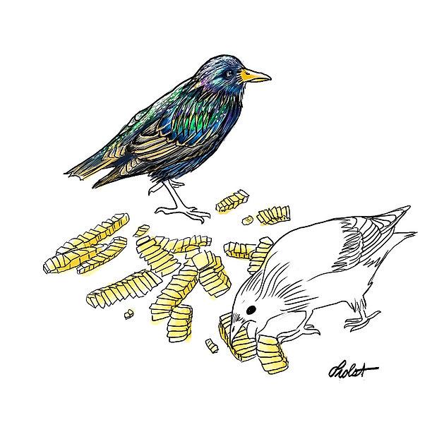 birds-msp_edited.jpg