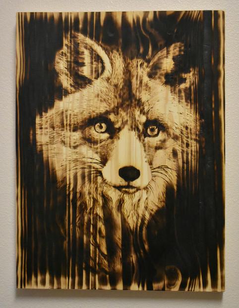 Extinction crisis_fox