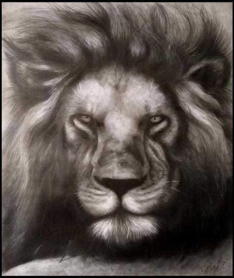 Extinction crisis_lion