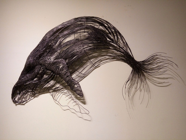 Record_Humpback Whale
