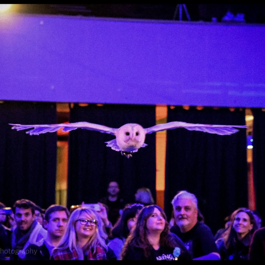 owls 1_edited