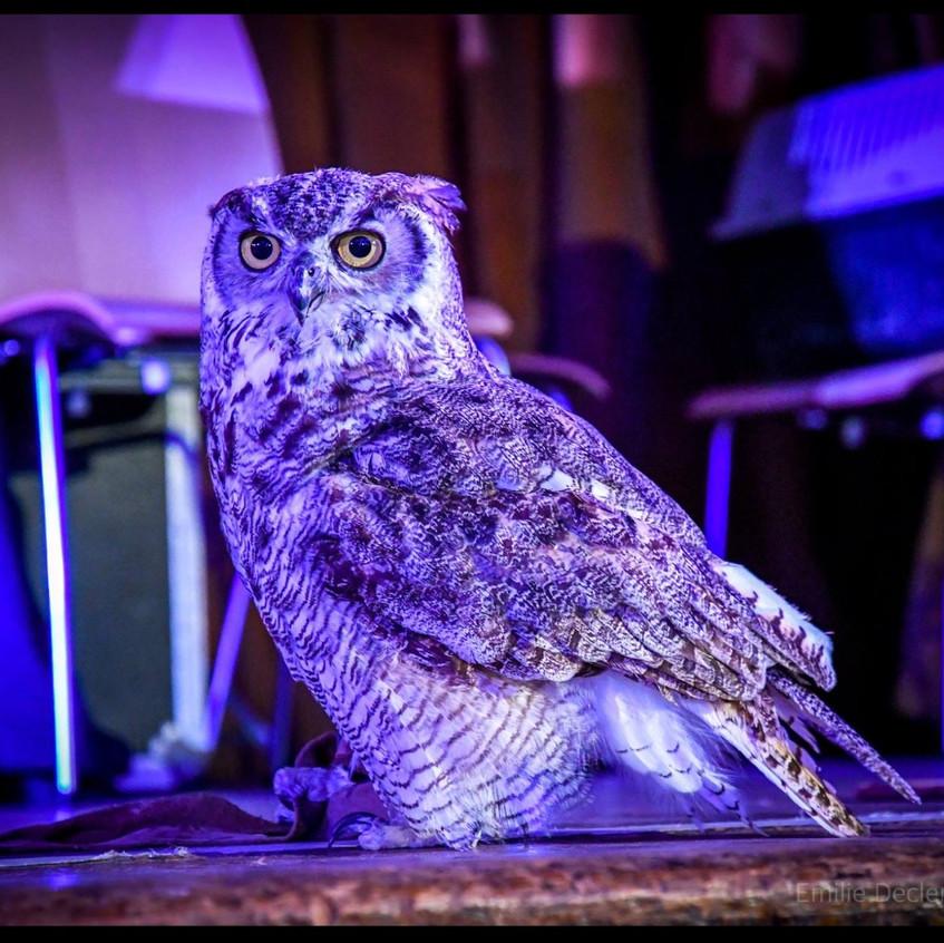 owls 5_edited