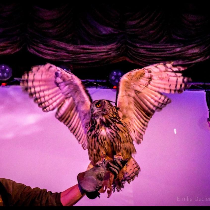 owls 3_edited
