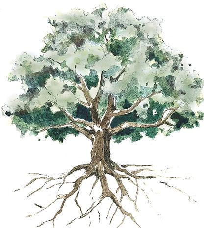 Rooted Tree.jpg