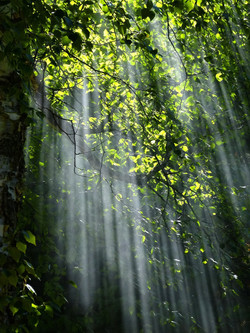 forest-light-nature-70365