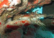 Coral Bowl Joes Jam Dive Site Turtle