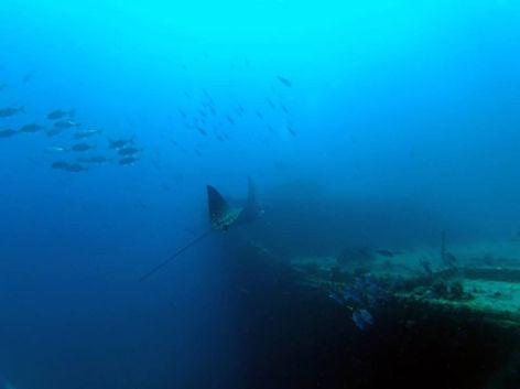 Ship Wreck Eagle Ray Wit Con St Thomas