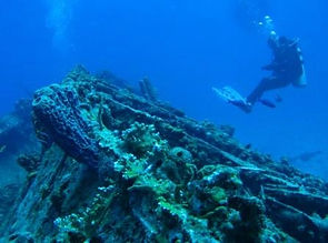 Coral Reef Stragglers St Thomas Dive Guide