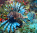 Why Lionfish Don't Belong in the Caribbean