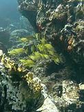 Ledges of Little St. James St Thomas Diving School Of Fish
