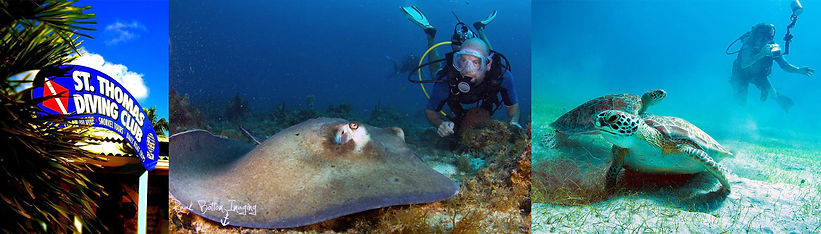 St Thomas Scuba Diving, Sting Ray, Turtle