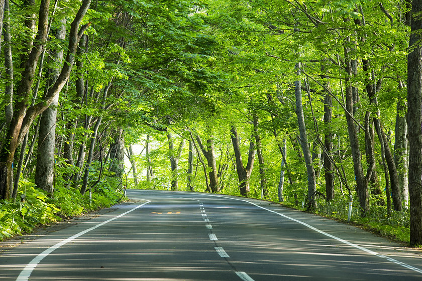 road in green forest.jpg