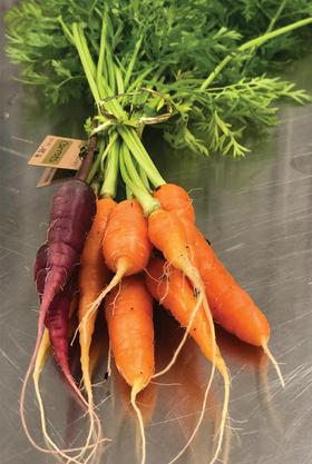 Carrots-01.png