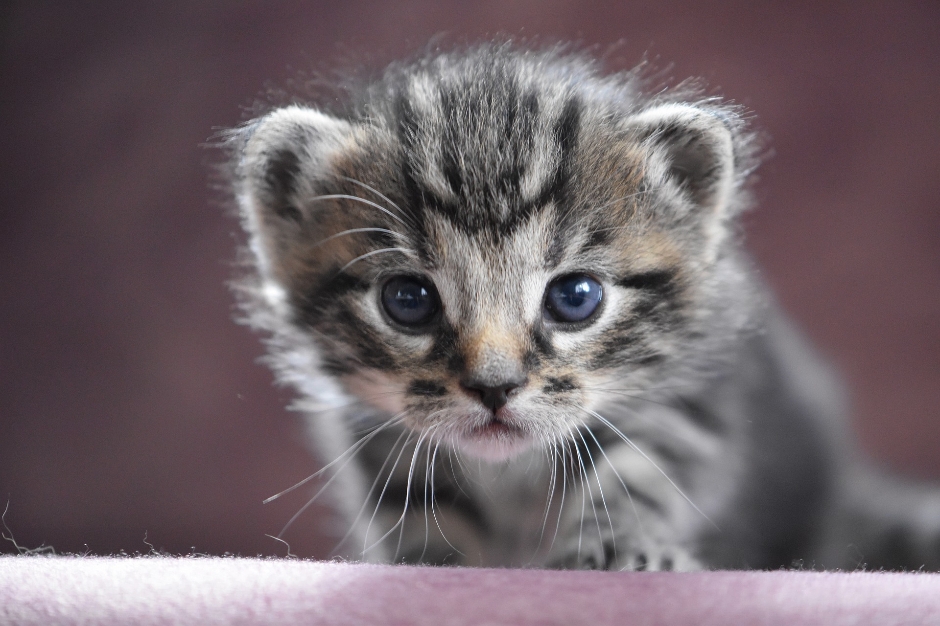 cat-baby-4201051_1920.jpg