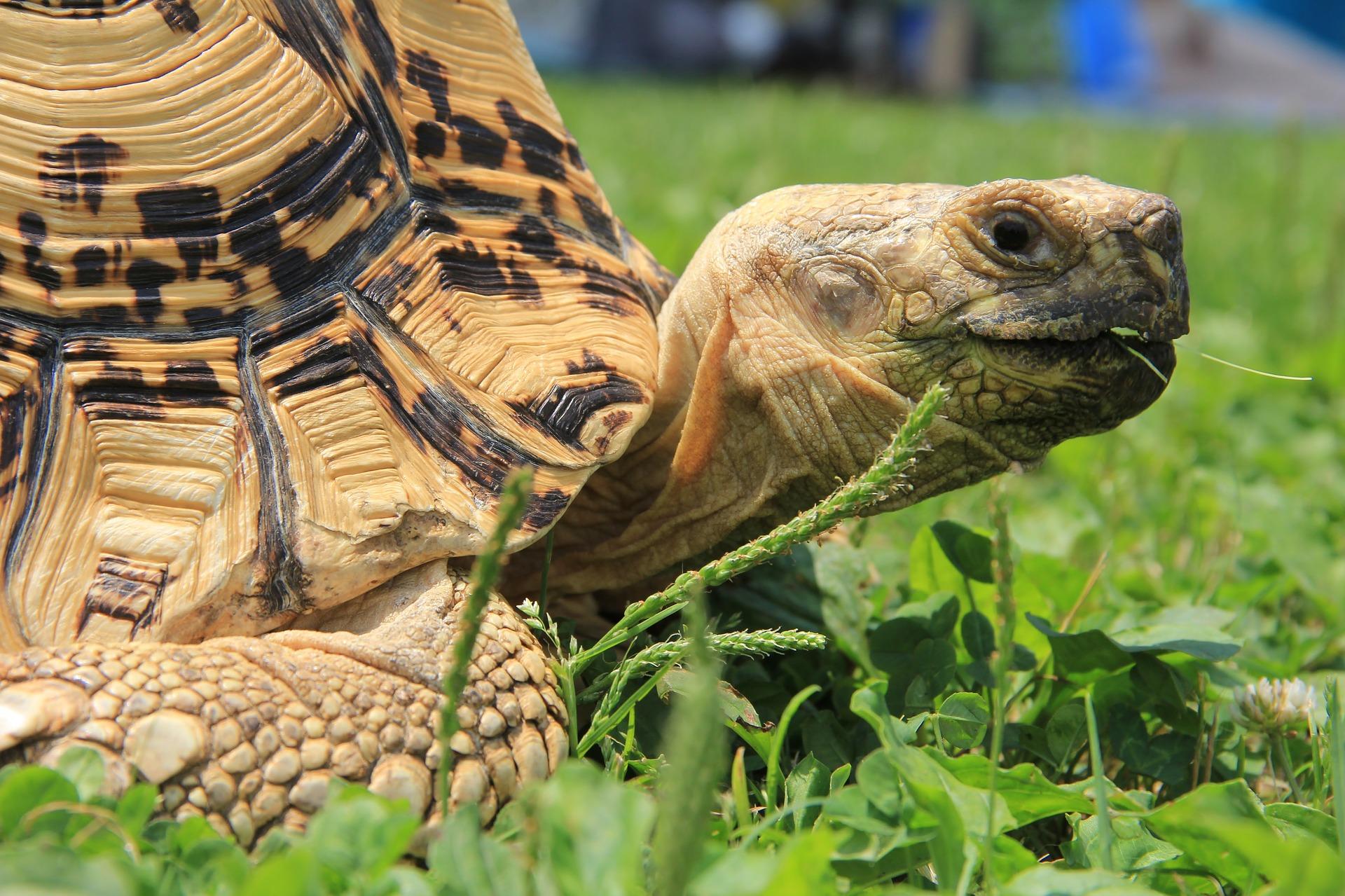 turtle-3546508_1920.jpg