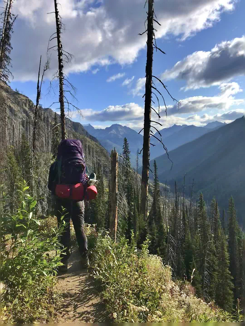 keep alberta parks beautiful mountains by staying on the trail