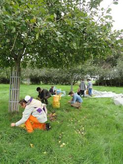chantier pomme