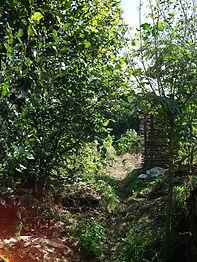 Verger Potager Phill Corbett kerzello permaculture.jpg