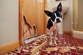 Puppy chewed the door