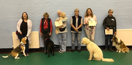 Dog training class photo