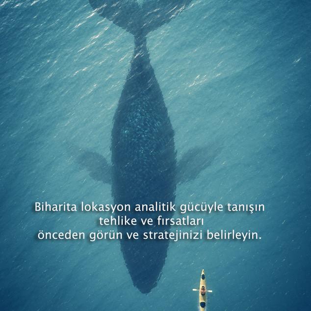 biharita-balina-DSS.jpg