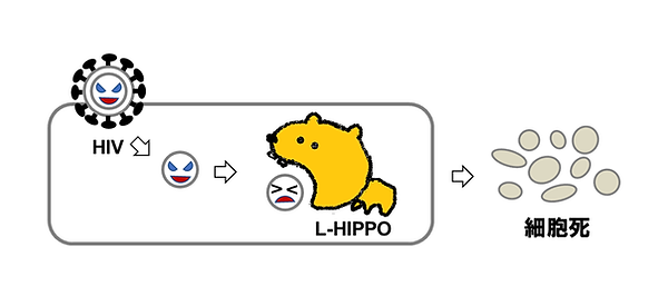 L-HIPPO.png