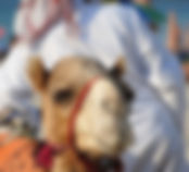 abu-dhabi-2003110_960_720.pixabay.jpg