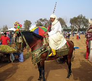 outdoor-people-animal-horse-africa-creat