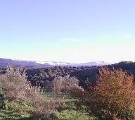 nature-675249.jpg