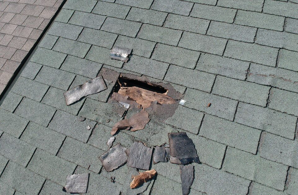 Pests in attic can cause roof damage