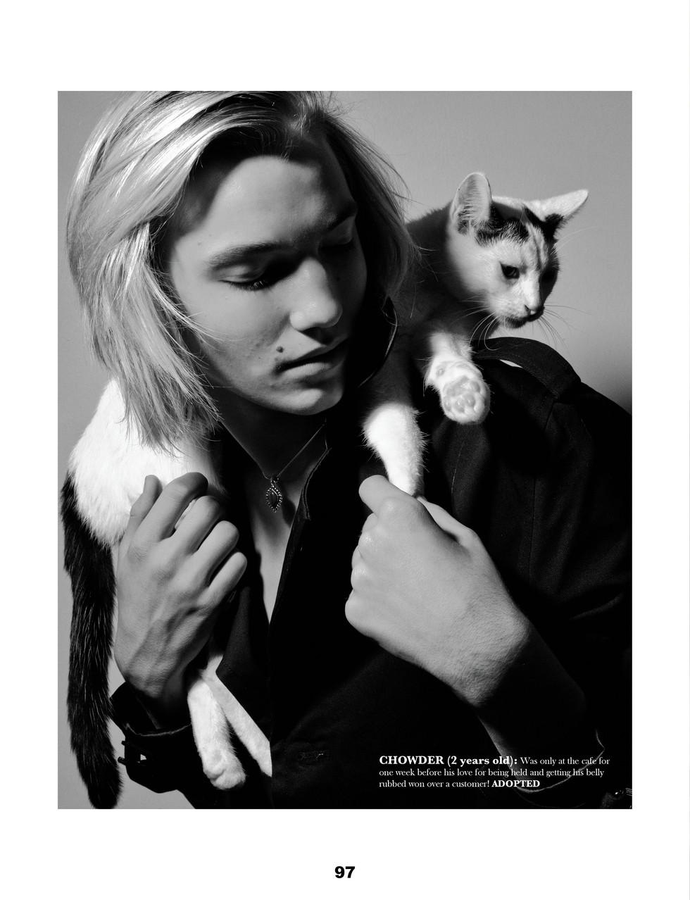 LOVE CATS3.jpg