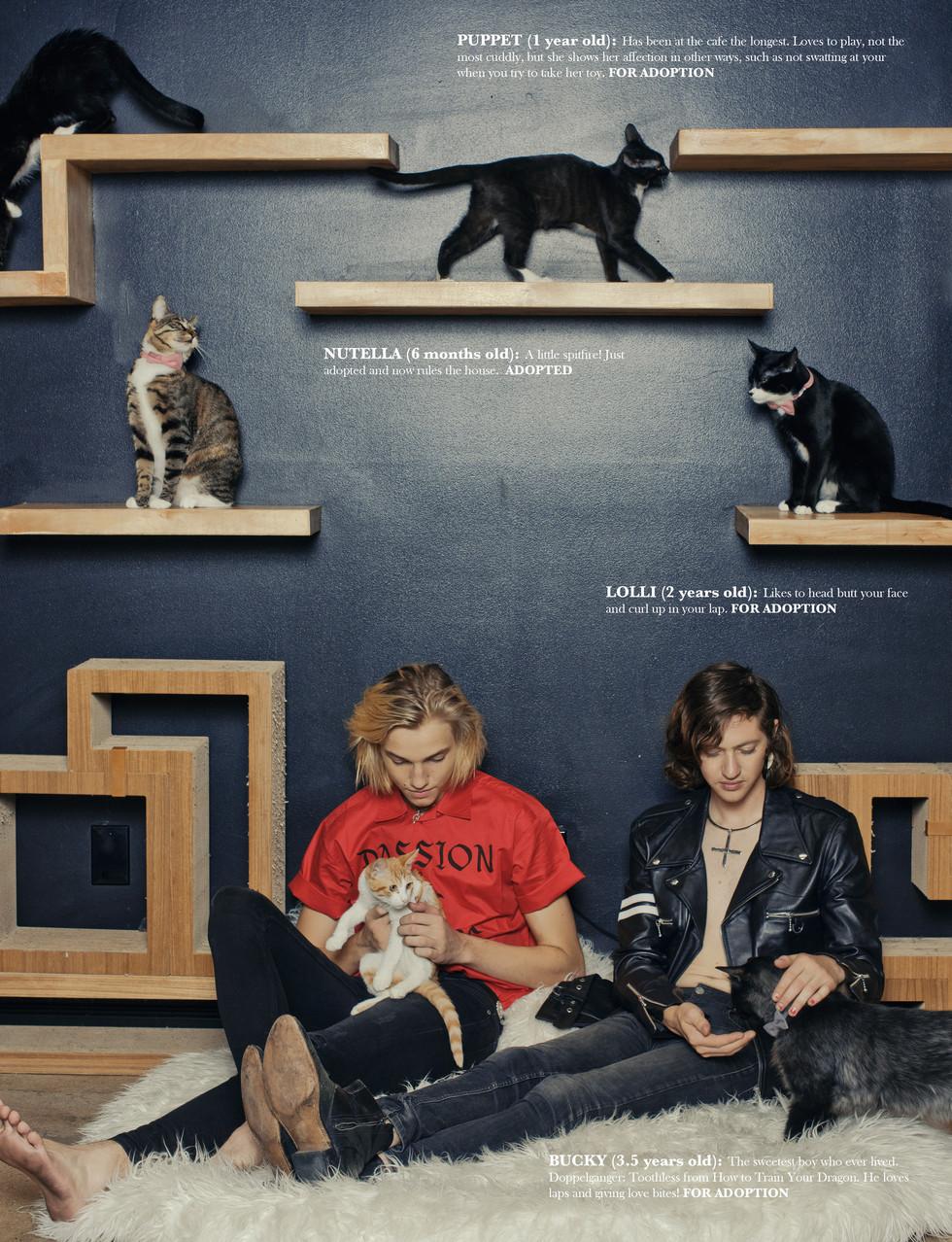 LOVE CATS8.jpg