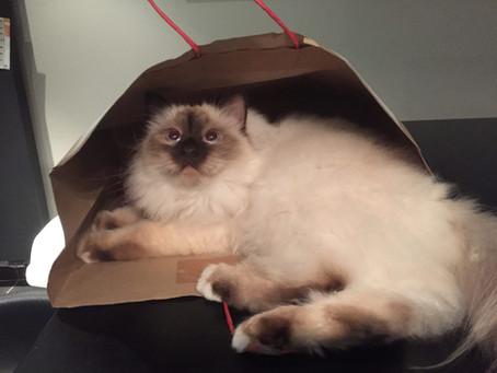 Een kat in een zak....hahahaha