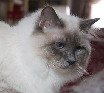 Wothan von der katzenfreiheit003.jpg