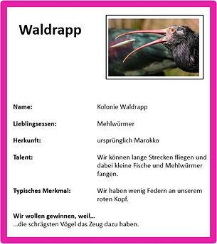 Waldrapp.jpg