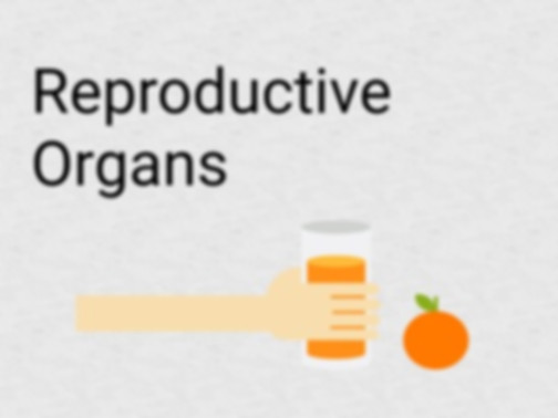 Yoga for reproductive organs, which yoga techniques benefit the reproductive organs, yoga for reproduction