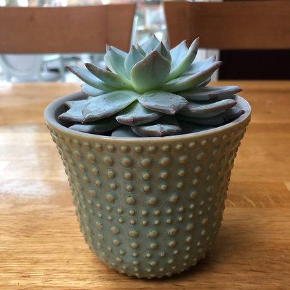Mambo green plant pot