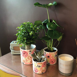 A few new pots have arrived today and th
