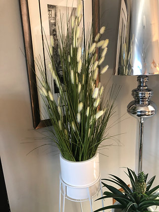 Large cats tail grass potted plant