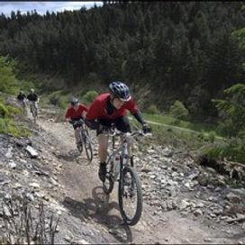 Dalby-Forest-230x230.jpg