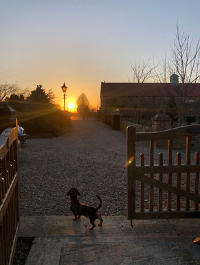 Stainers Farm's guard dog Dougie the Dachshund
