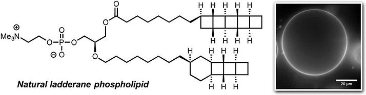 Lipids.png