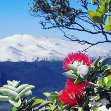 Mauna Kea Snow and Lehua