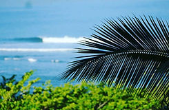 Palm fronds in front of the ocean
