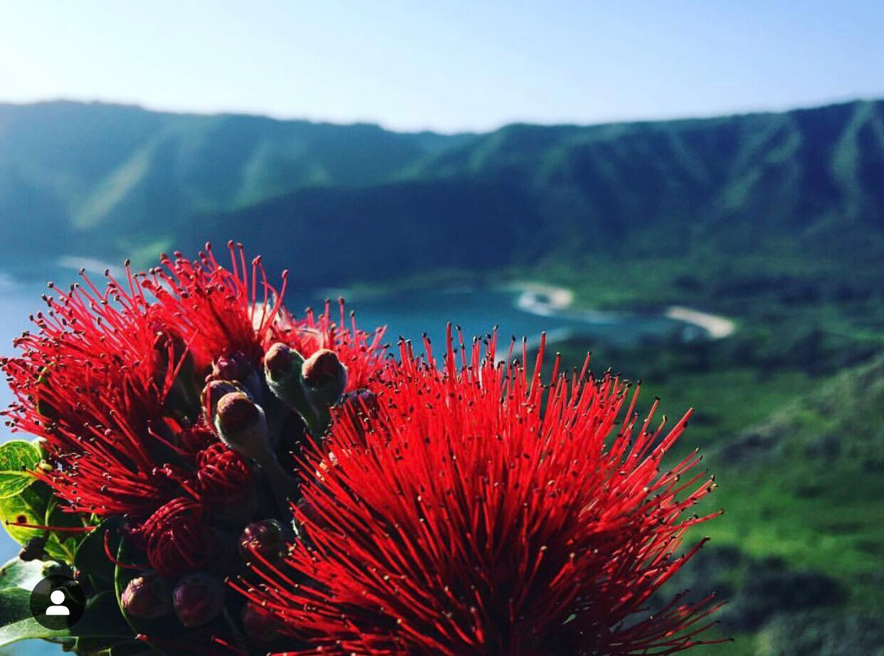 Lehua and Bay