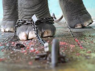 A metáfora do elefante acorrentado e a manipulação perversa materna