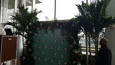 rent plants, palm trees, buy palm trees, rent palm trees, palm trees in new england, palm trees in new york, plant storage
