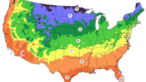Cold Hardiness Zone Map - Palm Trees In Your State