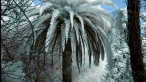 Taking Care Of Cold Hardy Palm Trees