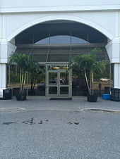 Palm Trees At Hotel, rent plants, palm trees, buy palm trees, rent palm trees, palm trees in new england, palm trees in new york, plant storage